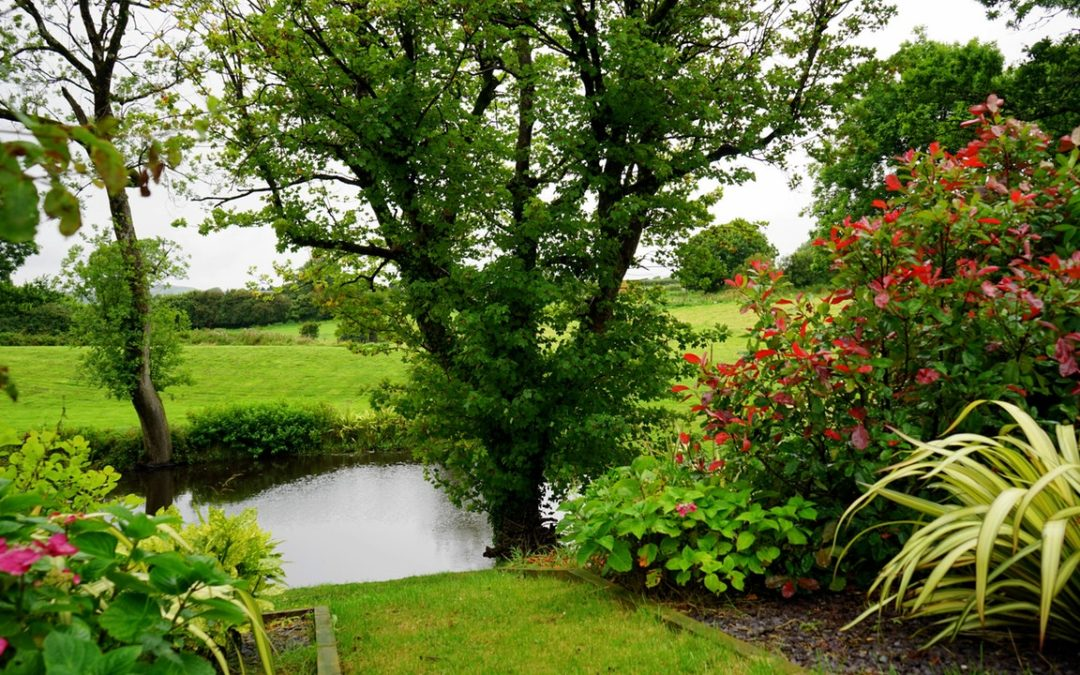 Ron Cadman – Reasons to Invest In Your Garden
